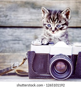 Tabby cute kitten with old photo camera on a wooden background.
