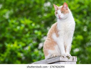 Tabby Feral Cat on a porch rail watching backyard.