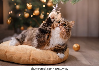 Cat Christmas.Christmas Cat Images Stock Photos Vectors Shutterstock