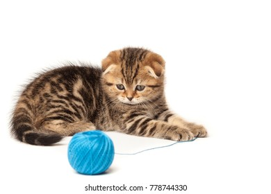 Tabby kitten with ball of yarn isolated on white background