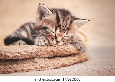 Tabby kitten cute sleeping in a wicker basket of wool.
