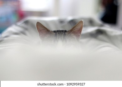 Tabby kitten hiding behind the blanket. Ears peeking. Selective focus.
