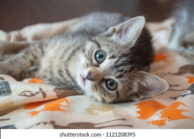 Tabby kitten laying on blanket