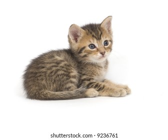 A tabby kitten lays down for a nap on a white background
