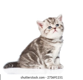 Tabby kitten looking up. isolated on white background