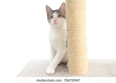 Tabby kitten on the scratching post