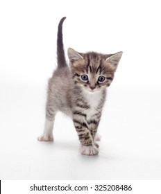 tabby kitten playing on white background