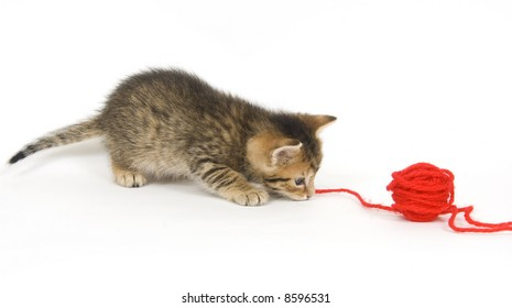 A tabby kitten plays with a ball of yarn on white background.