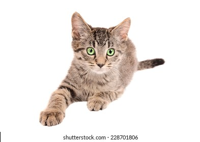 A tabby kitten reaching out on white