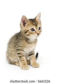 A tabby kitten sits on a white background