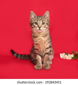 Tabby kitten sitting on red background