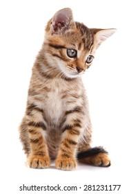tabby kitten sitting on white background