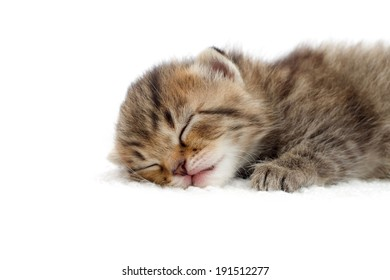 tabby kitten sleeping