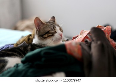 Tabby kitten sleeping between colorful clothes. Selective focus.