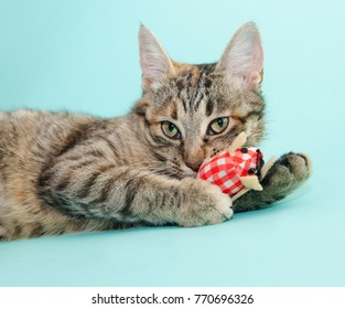 Tabby lying cat with toy on blue background
