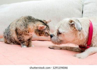 Tabby and Terrier Kissing