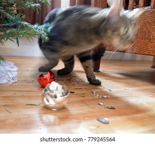 Tabby walking away from broken christmas ornaments under the tree