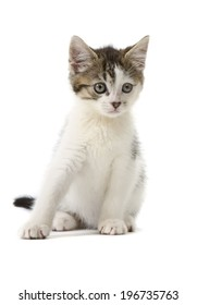 Tabby and white kitten isolated on white background