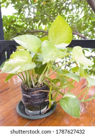 The​ gree​n garden​ plant​ on​ wooden​ table.