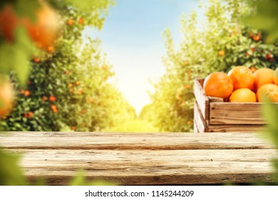 Table background of free space for your decoration and fresh orange fruits in garden. Summer sun light.