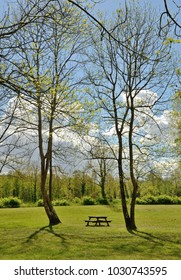 A table with benches are under lonely trees in the open space of the forest.