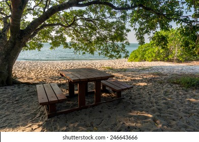 Table and benches under the tree at beach