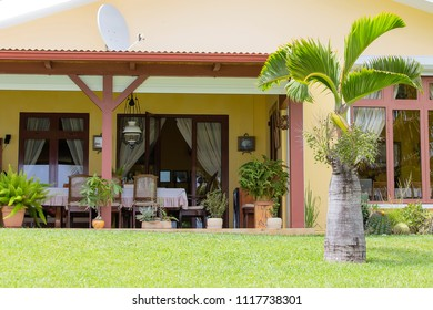 Table, chairs and palm tree in summer garden on green grass lawn at sunny day. Adorable outdoor design. Silence, comfort, calm, vacation and solitude concept.