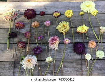 Table of Dahlias Wilted