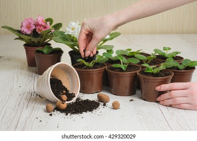 Table with flower pots, potting soil and plants