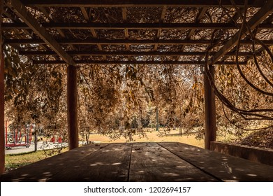 Table for picnic under a wood pergola in a park with reddish foliage