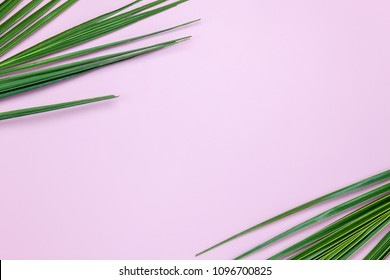Table top view aerial image of summer season holiday background concept.Flat lay coconut or palm green leaf on modern rustic pink paper backdrop.Free space for creative design mock up text for content