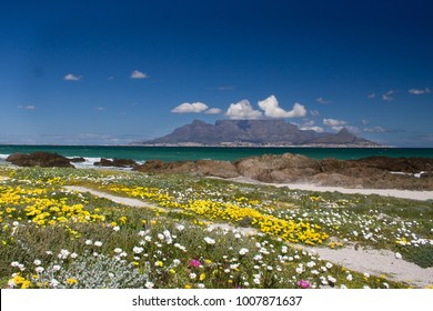 Tablemountain cape town in spring with flowers blooming