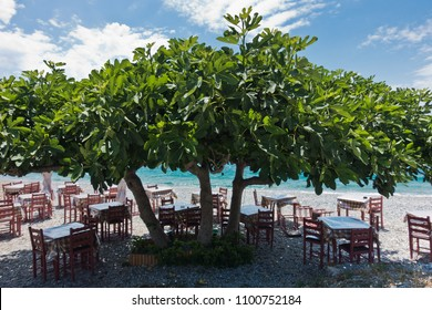 Tables and chairs at the beach in a shade of a big fig tree at Panormos bay, Skopelos island, north Aegean, Greece