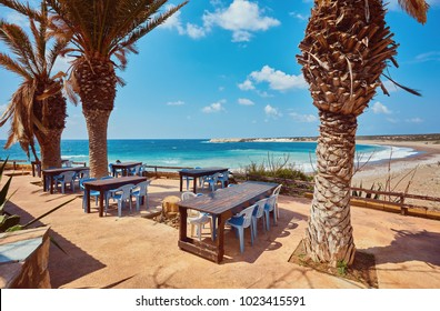 Tables and chairs in a cafe with palm trees on the beach Lara, Cyprus