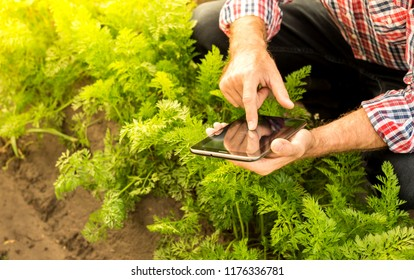 Tablet in farmer's hands. Green carrot field as background. Modern technology in agriculture - concept. Country outdoor scenery.