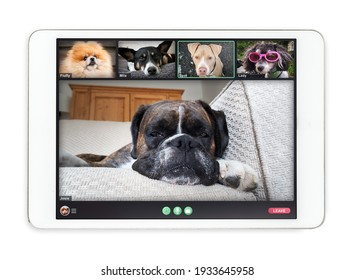 Tablet screen with dogs talking to dog friends in group videocall. Group of pets having an online meeting in video call. Concept for virtual business meetings or pets using technology. Isolated.