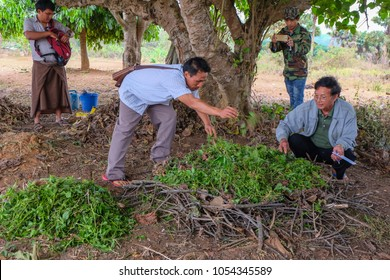 Tachileik, Myanmar - April 1 2017. Adding wet weeds to dead leaves and dry twigs to create biochar (to improve crop yield)