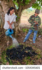 Tachileik, Myanmar - April 1 2017. Adding diluted urine to charred wood, wet weeds, dead leaves and dry sticks to create biochar