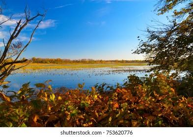 tacky nature reserve retaining pond