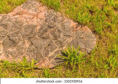 Taean, South Korea; August 14, 2019: Replica of prehistoric plant life fossilized in slab of stone on display at Anmyeondo Jurassic Museum.
