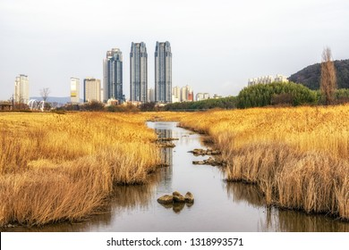 Taehwagang park reed field with a small stream in the middle overlooking the nearby apartment buildings. Taken in Ulsan, South Korea. February 15th 2019.