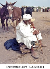 TAFILALET, MOROCCO-JULY 11, 2014: Cattle market where donkeys,horses,camels and dromedaries are sold