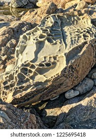 Tafoni rock in Coastal Ca;lifornia, Bean Hollow State Beach, USA