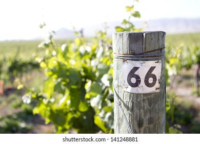 A tag for a row in a vineyard.