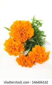 Tagetes flower and leaves against a white background