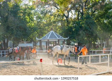 Taichung, DEC 22: Houli Horse Ranch of Taichung World Flora Exposition on DEC 22, 2018 at Taichung, Taiwan