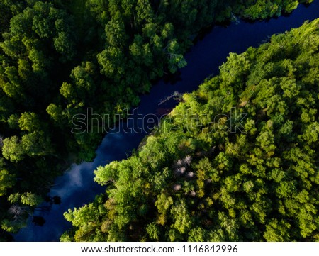 Taiga forest from aerial view. Forest river. Vasyugan swamp. Siberia, Russia