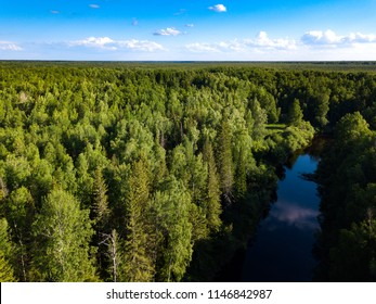 Taiga forest from aerial view. Vasyugan swamp. Siberia, Russia
