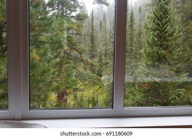 Taiga forest for the window