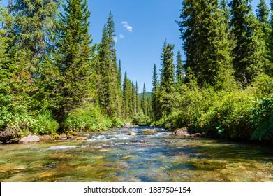 "Taiga. Siberia. Ergaki. Mountain stream flowing from the lake ""Svetloe."" - Shutterstock ID 1887504154"